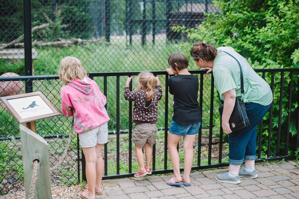 Pine Grove Zoo Little Falls | The Second Oldest Zoo in Minnesota | Up North Parent
