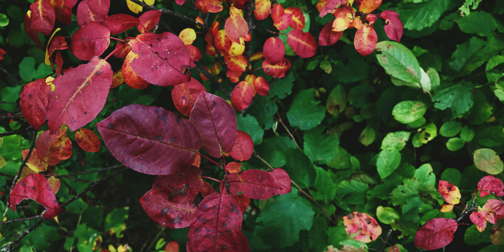 6 Tips For Autumn Self-Care | Cozy Blankets, Colorful Leaves and Pumpkin Spice Everything