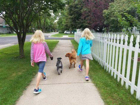 Brainerd Lakes Area petsitting
