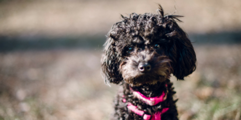 Best Summer Pet Care Tips
