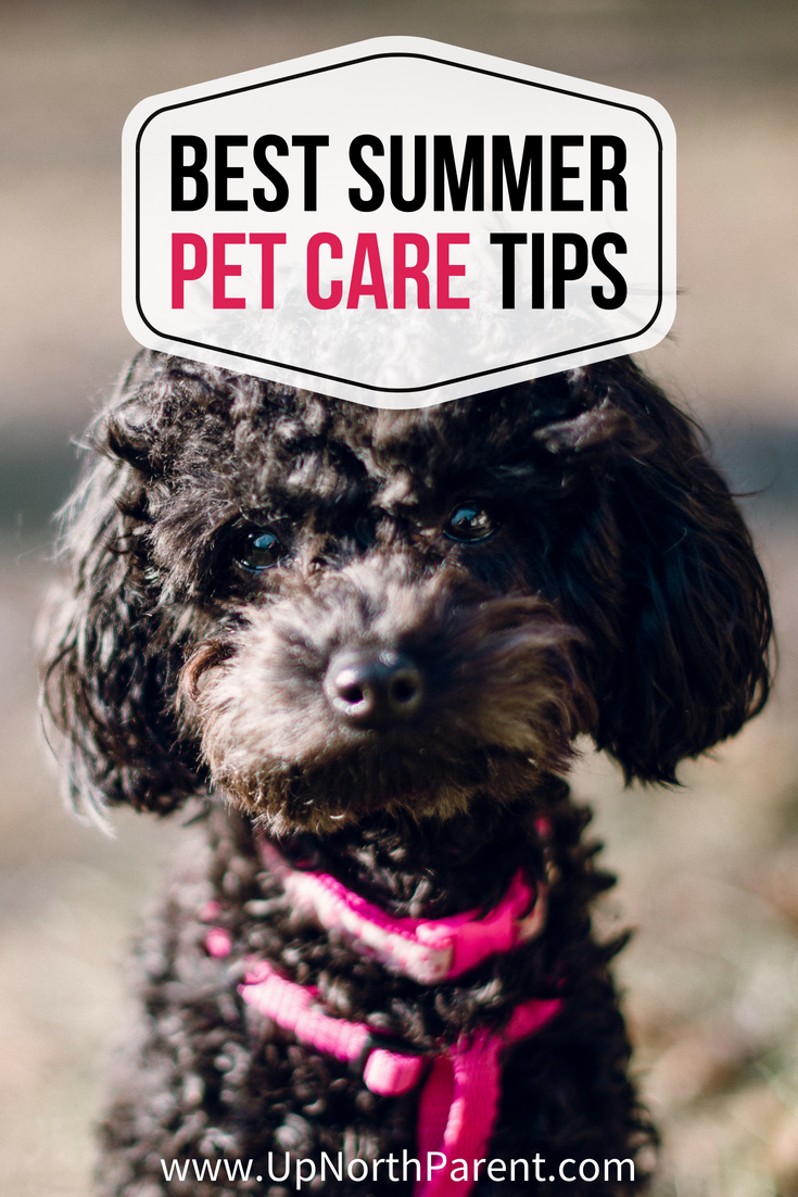 Best Summer Pet Care Tips