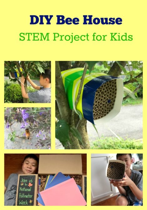 STEM pollinator activity