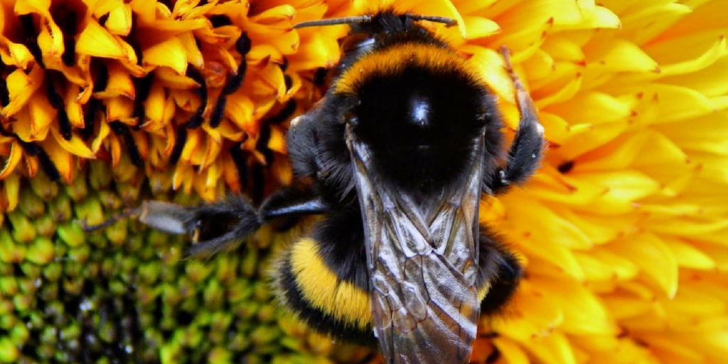The Care and Feeding of Bees | National Pollinators Week 2019