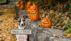 Pup-or-Treat! Easy Halloween Pet Treats